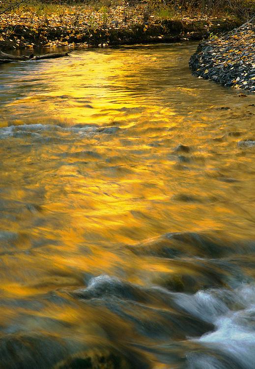 Trail Creek, near Sun Valley, IdahoFall color reflected on stream