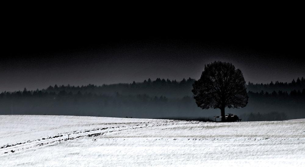 White field black tree