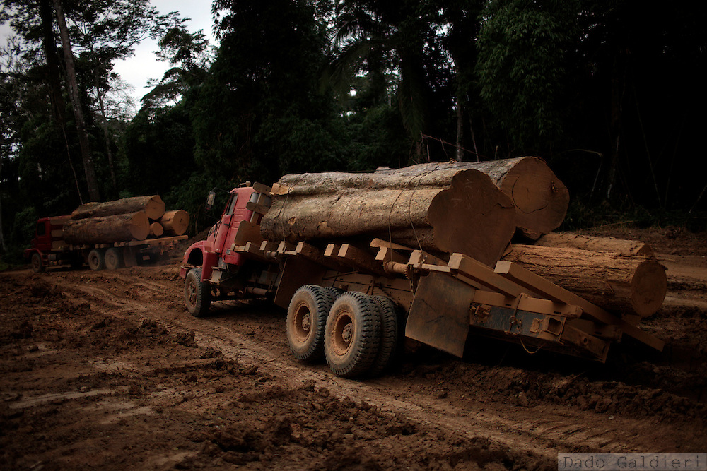 A truck loaded with centennial Shiwawako stopped by a muddy road at a forest concession in Iñapari, Peru, Monday, June 27, 2011. As a Brazilian-Peruvian construction consortium  finishes the building of a 700 meter long, Golden Gate style bridge that will modernize the connection through the binationa Amazon region, fears rise among environmentalists, indigenous groups and civil population that this bridge will bring an economic boom that the region is not prepared to cope with. Long dreamed by the South American giant as the shortcut to Asian markets as well as by illegal miners and loggers, the bridge and the absence of state in Peruvian territory can provide an easier way to access and extract a humongous wealth lying underneath pristine forests and forgotten rivers. A gold rush near the Tambopata national park is under way and logging of Shiwawako, a hard wood fine species is replacing the once valued Caoba, now almost extinct in the region, is on a sharp rise. (Dado Galdieri)