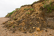 Mass movement collapse of soft clay sandy cliff, Bawdsey, Suffolk, England, UK Early Pleistocene Red Crag Formation