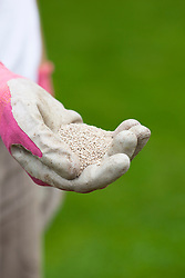 Handful of lawn fertiliser