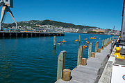 Wellington Waterfront, people kayaking in the harbour. Wellington, New Zealand