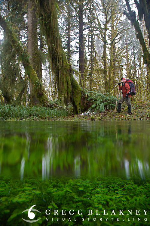 Rainforest Underwater - Backpacker -Maple Glade Trail - Quinault Valley - Olympic National Park - Washington State - USA