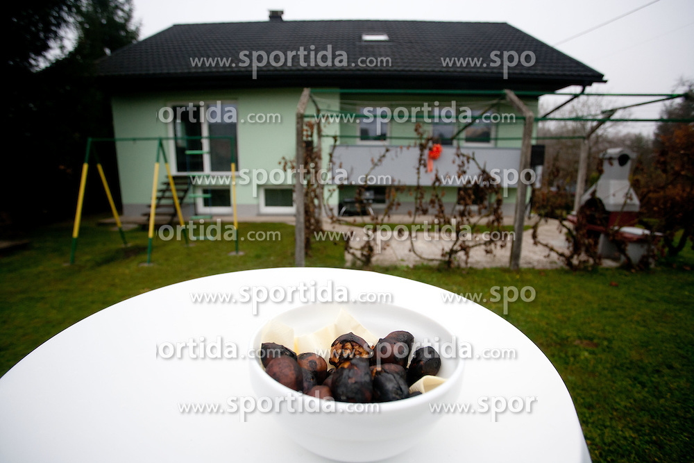 Pravi kostanj (Castanea sativa), eng. Chestnuts, on November 10, 2011, in  Slovenia. (Photo by Vid Ponikvar / Sportida)