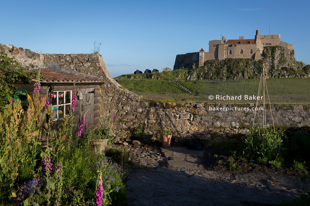 Lindisfarne Castle and the National Trust's Gertrude Jekyll walled garden on Holy Island, on 27th June 2019, on Lindisfarne Island, Northumberland, England. The Holy Island of Lindisfarne, also known simply as Holy Island, is an island off the northeast coast of England. Holy Island has a recorded history from the 6th century AD; it was an important centre of Celtic and Anglo-saxon Christianity. After the Viking invasions and the Norman conquest of England, a priory was reestablished.