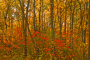 Autumn in hardwood forest. St. Vital Municipal Park.<br />