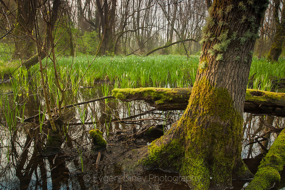 Veleka river in spring