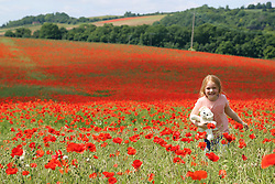 © Licensed to London News Pictures. 30/06/2013. Horton Kirby, United Kingdom. A young girl plays in a stunning red poppy field in Kent on a gloriously sunny day credit : Rob Powell/LNP