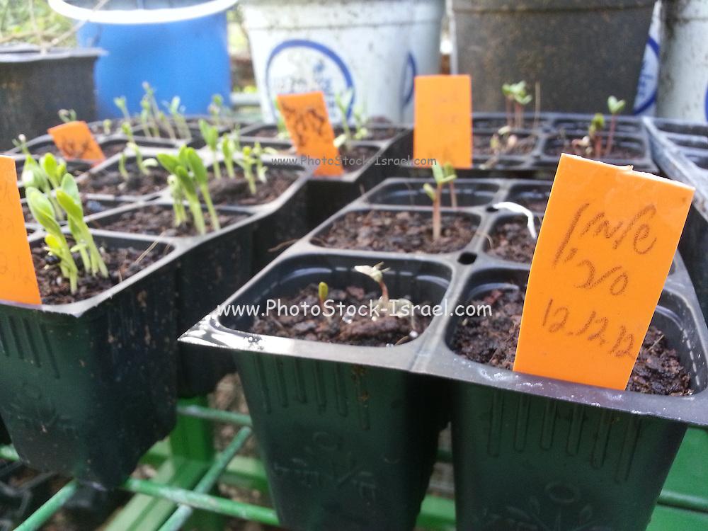 Eco Garden Organic gardening and farming project, Hiafa, Israel. Plants in the greenhouse