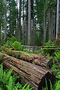 Macmillan Provincial Park Photos