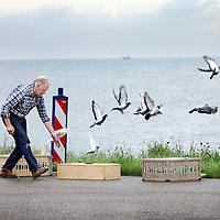 Nederland, Marken , 31 augustus 2011..Duiventeler laat zijn duiven los bij het Ijsselmeer in omgeving Marken Noord-Holland..Foto:Jean-Pierre Jans
