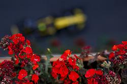 April 29, 2018 - Baku, Azerbaijan - Motorsports: World Championship; 2018; Grand Prix Azerbaijan, Grand Prix of Europe, Formula 1 2018 Azerbaijan Grand Prix, .#55 Carlos Sainz (ESP, Renault  (Credit Image: © Hoch Zwei via ZUMA Wire)
