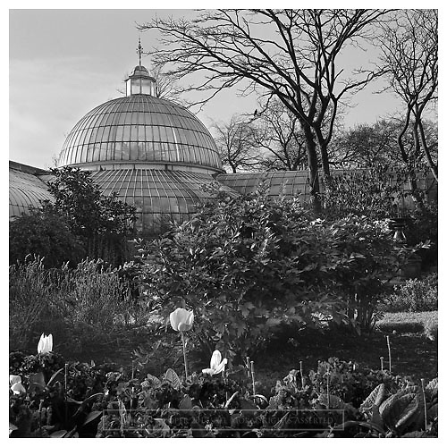 Black and white photograph of the Kibble Palace at Glasgow's Botanic Gardens.