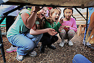 3rd grade students Ava Barbano, Catherine Morris and Katherine Huang, all 8, look at an Earthworm that slithered through a table crack during a gardening class at El Camino Creek Elementary School in Carlsbad on Friday, Dec. 7 2012.(Photo by Sandy Huffaker)