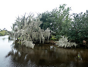 Landscape of the Swampland in the Louisiana bayou, USA