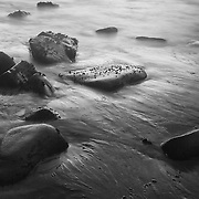 Low Tide Exposed Rocks - Dusk - Pfeiffer State Beach - Big Sur, CA - Black & White