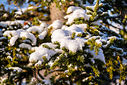 An early season snow dusts the boreal forests in Denali National Park, McKinley Park, Alaska