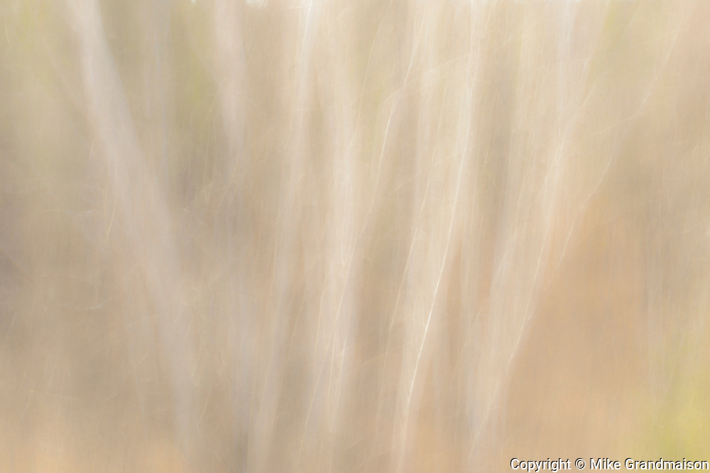 Intentional camera movement (ICM) of trees<br />