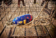A crab pot sits on a dock at the Bayshore Center at Bivalve located along the Maurice River in Cumberland County, NJ.