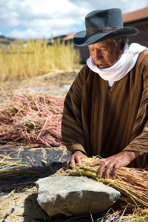 Usuario no identificado de Pension 65 trabaja con la quinua en Pampa Cangallo, Morochuco, Ayacucho.
