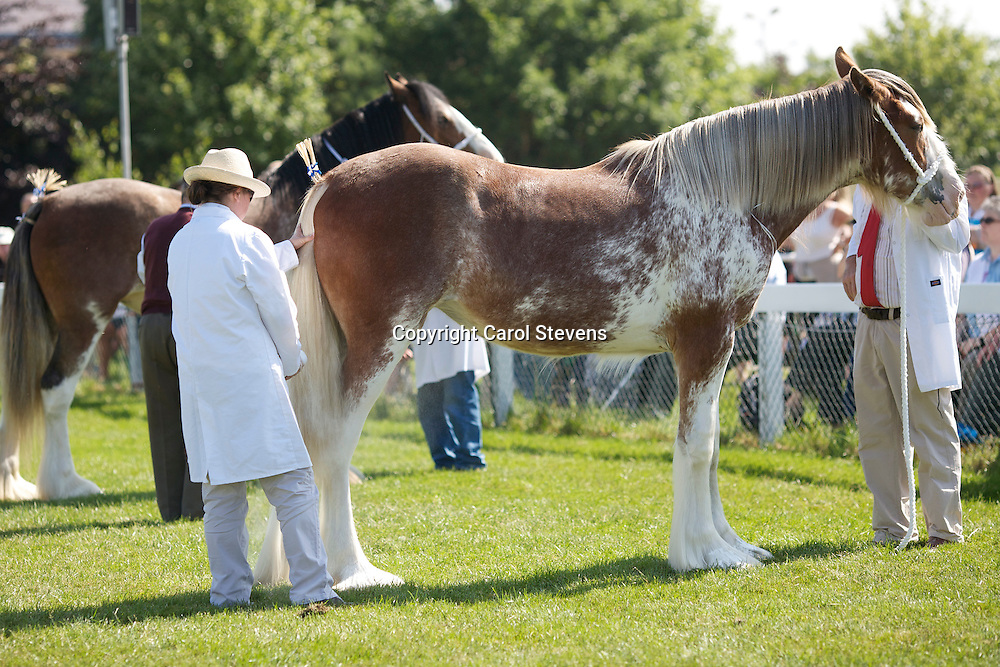 Charlotte Young and her Roan Filly Yearling  Downhill Heather  <br />