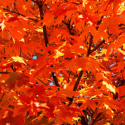 """Orange"" <br />