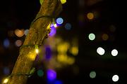 Blurry background, bokah, lights, purple, white.