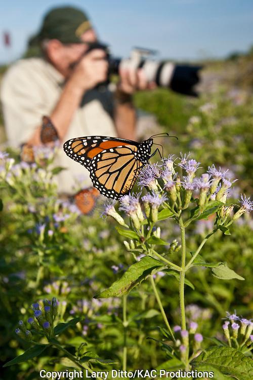 photographer photographing queen butterflies, Starr Co., Texas