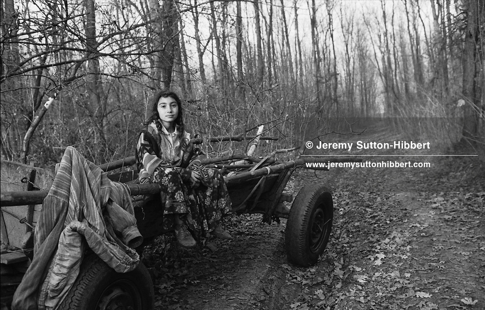 Zena Stanescu, sits atop her families cart, whilst illegally collecting wood in a forest near the Kalderash Roma camp of Sintesti, near Bucharest.