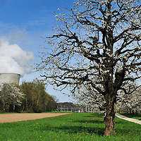 Trees in blossom and Leibstadt nuclear power station, which stands close to the German border.<br />
