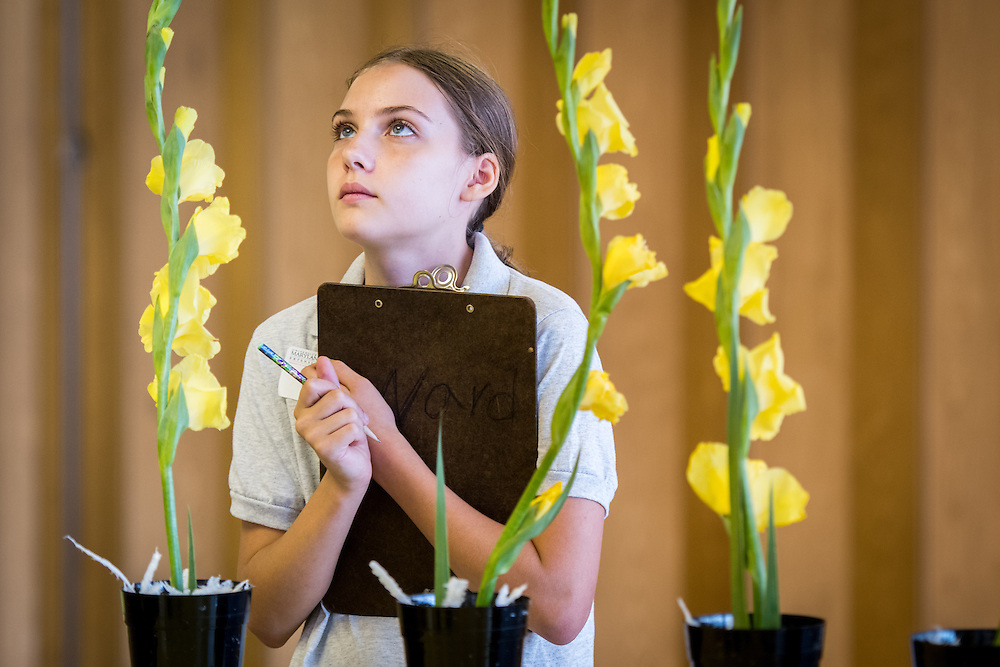 A young girl examines some planted daffodils for a horticulture contest at the Maryland state fair.