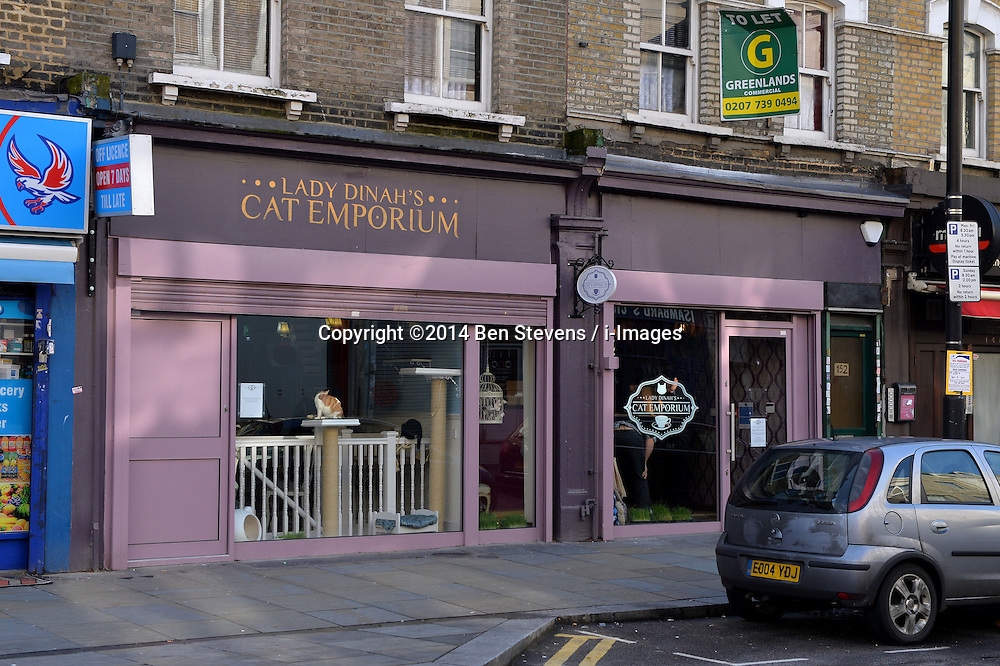 Lady Dinah's Cat Emporium on Bethnal Green Road, Shoreditch, London, where cat lovers can dine with a selection of resident cats.<br /> Saturday, 1st March 2014. Picture by Ben Stevens / i-Images
