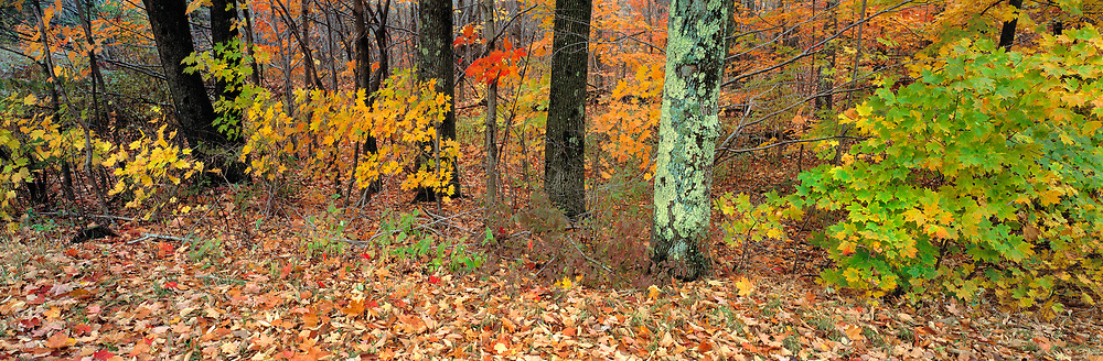 Fall color adorns the forest in the Catskill Mountains of New York.