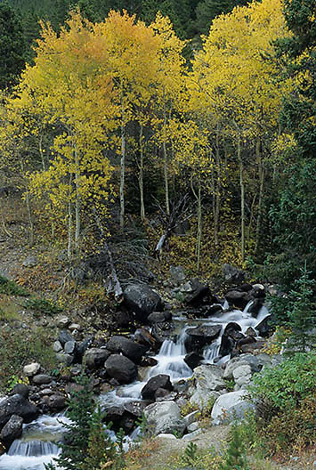 Water cascades down through golden aspens along the Beartooth Highway Pass. Montana.