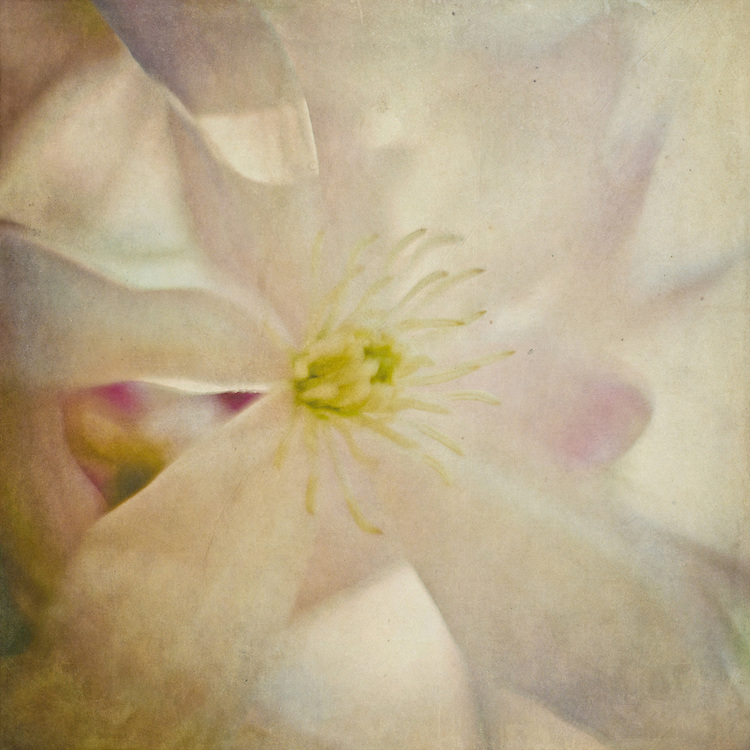 clematis floral textureblend