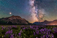 A flower-filled meadow at the Hay Barn Road at Waterton Lakes National Park, Alberta, with the summer Milky Way and Mars to the south over Waterton Valley and Vimy Peak at left. <br /> <br /> Mars is the bright object at left, and Saturn is dimmer in the Milky Way at right of centre, left of the pink Lagoon Nebula. Green bands of airglow tint the sky. <br /> <br /> Waterton Lakes is a World Heritage Site and Dark Sky Preserve.<br /> <br /> This is a blend of 3 x 4-minute exposures at f/5.6 for depth of field for the foreground and averaged to smooth noise, and a single 20-second exposure at f/2 for the sky to minimize trailing, all with the Sigma 24mm Art lens and Nikon D750 at ISO 6400. Taken July 13, 2018 on a superb night at Waterton. <br /> <br /> Luckily, the night was not too windy, so the flowers were not moving too much in the long exposures. But wind inevitably blurs them. <br /> <br /> The foreground is not light painted &mdash; illumination is just by natural starlight, though foreground details are brought out with a generous helping of shadow recovery.
