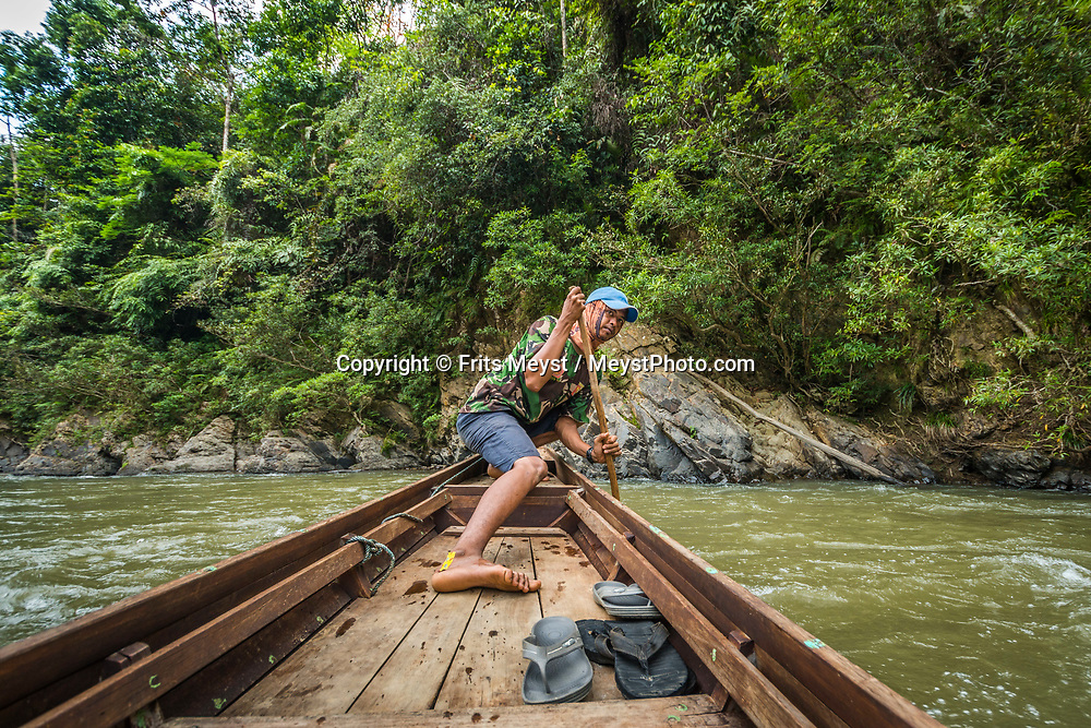 Rimbang Baling Wildlife Sanctuary, Sumatra, Indonesia, August 2017. The Subayang river carries researchers deep into the reserve. Unfortunately it is also used for the transportation of illegal logging. International volunteers of Biosphere Expeditions work together with local scientists of the WWF project to  protect the Sumatran Tiger. The 'citizen scientists' survey the rainforest on foot and in boats, looking for tracks, kills, scats and the animals themselves, and setting camera traps. They also work with local people on capacity-building and creating local incentives for tiger conservation. All this in an effort to mitigate human-wildlife conflict and create strategies to ensure the survival of the critically endangered Sumatran tiger into the future. Photo by Frits Meyst / MeystPhoto.com