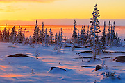Sunrise on the tundra<br /> Churchill<br /> Manitoba<br /> Canada