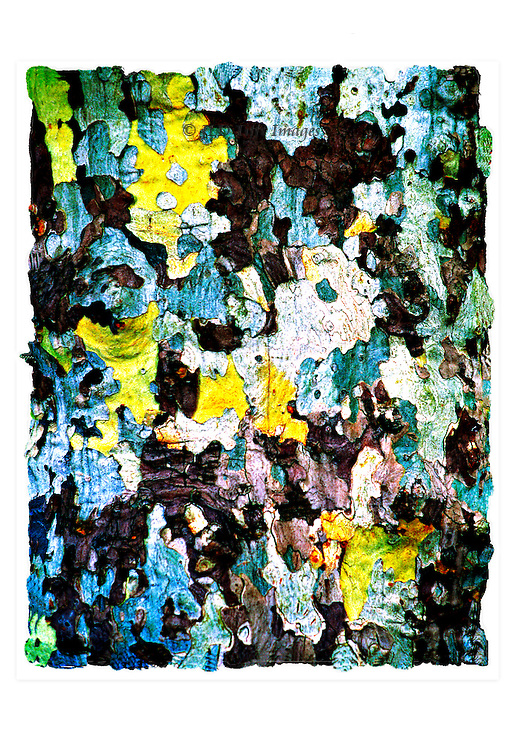 Closeup of the natural bark pattern of a sycamore tree in Aix-en-Provence.  The colors have been intensified in the image.