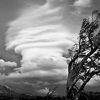 High winds in Patagonia create incredible cloud formations and wind blown trees.