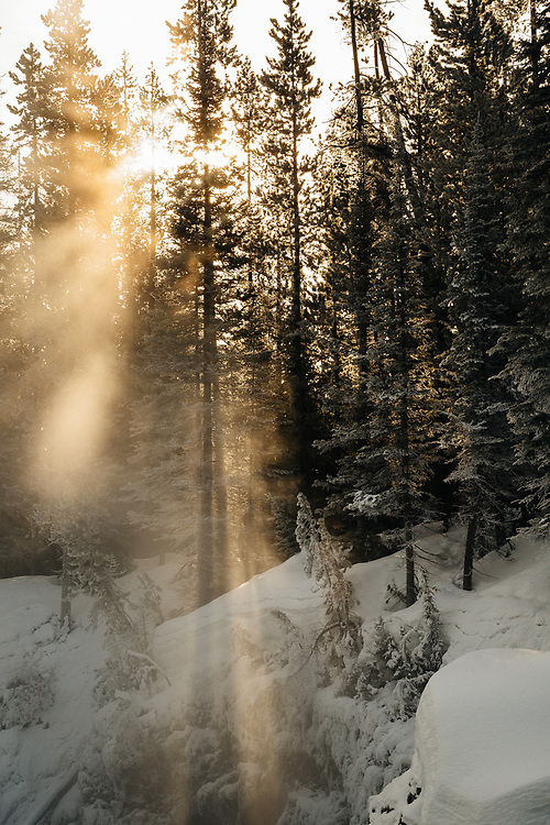 Rays of sunlight break through the trees during sunrise in Yellowstone National Park.