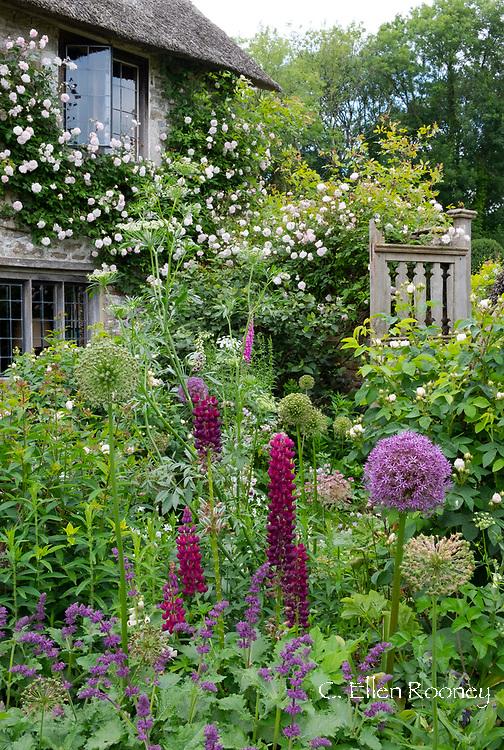Rosa, Allium, Lupinus and Digitalis in the courtyard garden at Southwood Farm, Devon, UK