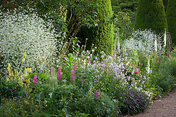 Crambe cordifolia, lupins and foxgloves in the borders of the Rose Walk at Hidcote Manor in June. Topiary yew pillars