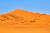 Maroc, région du Tafilalet, désert de Merzouga, dunes de l'erg Chebbi // Morocco, Tafilalet region, Merzouga desert, erg Chebbi dunes
