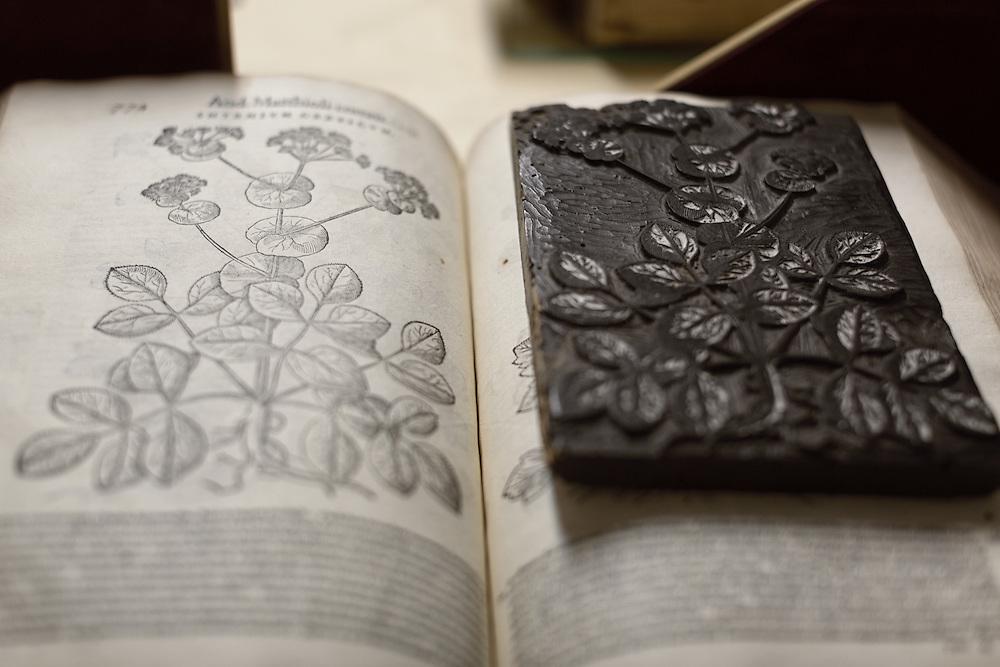 erbario Mattioli con xilografia e straordinario ritrovamento del legno corrispondente  XVI secolo.<br /> <br /> xilography of XVI century