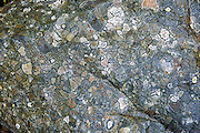 Over time, Lichen etches rock into polygon patterns in Yoho National Park, British Columbia, Canada. This is part of the Canadian Rocky Mountain Parks World Heritage Site declared by UNESCO in 1984.