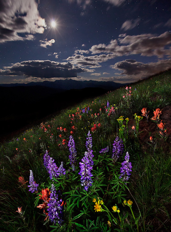 Wildflowers bloom beneath the midnight heavens. A great deal of time was spent waiting for the wind to die down as the slightest breeze would blur the flowers.