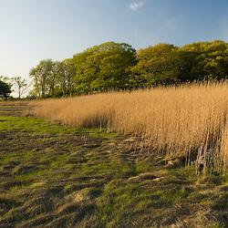 Salt marsh in spring.  Strawberry Hill Preserve in Ipswich, Massachusetts.