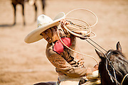 31 AUGUST 2007 -- PHOENIX, AZ: A competitor reacts to roping a bull in the Jineteo de toros, Mexican bull riding at the Congreso y Campeonato Nacional Charro in Phoenix, AZ, Friday, August 31. The event is the US championship for the Mexican Federacion Mexicana de Charreria. The winners of the US championship go on to compete in the Mexican Charreada championships in Morelia, Michoacan, Mexico in October. Charreadas are Mexican style rodeos that are popular in Mexican communities throughout the US. As the Mexican immigrant community has expanded throughout the US, the sport has expanded with it. Charreadas are now held as far north as Minnesota and along the US - Mexico border.   Photo by Jack Kurtz