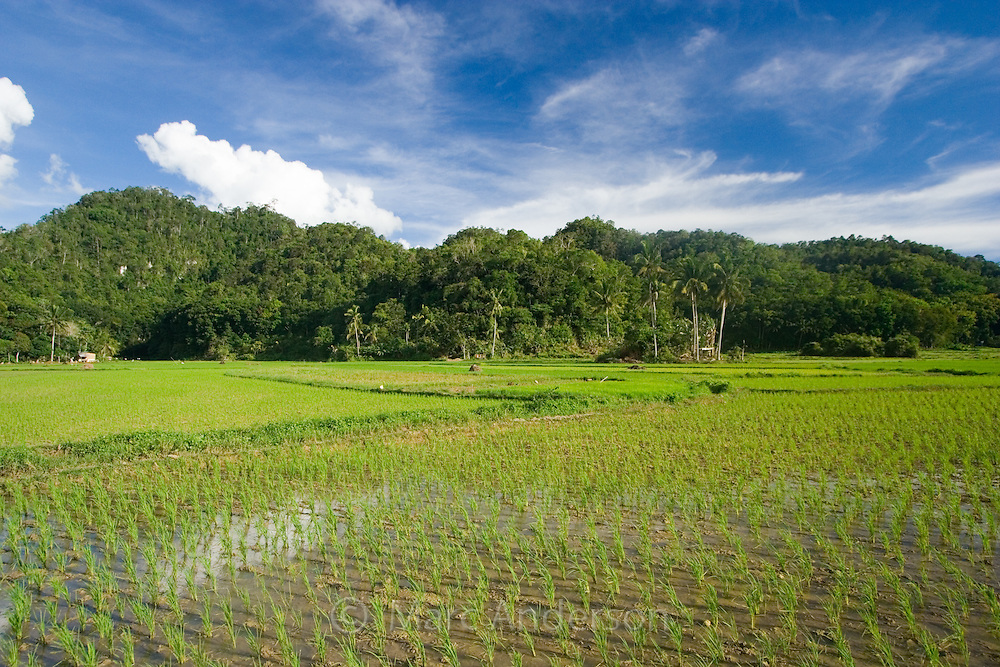 Lush green rice fields in Bohol, Philippines